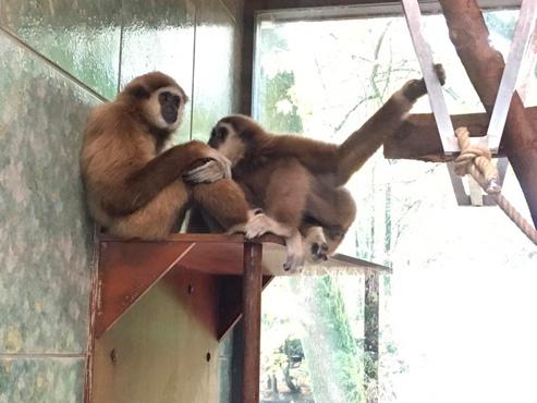 Neue Zoo-Bewohner