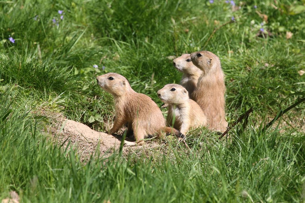 Wuppertal – Grüner Zoo – Eintrittspreise