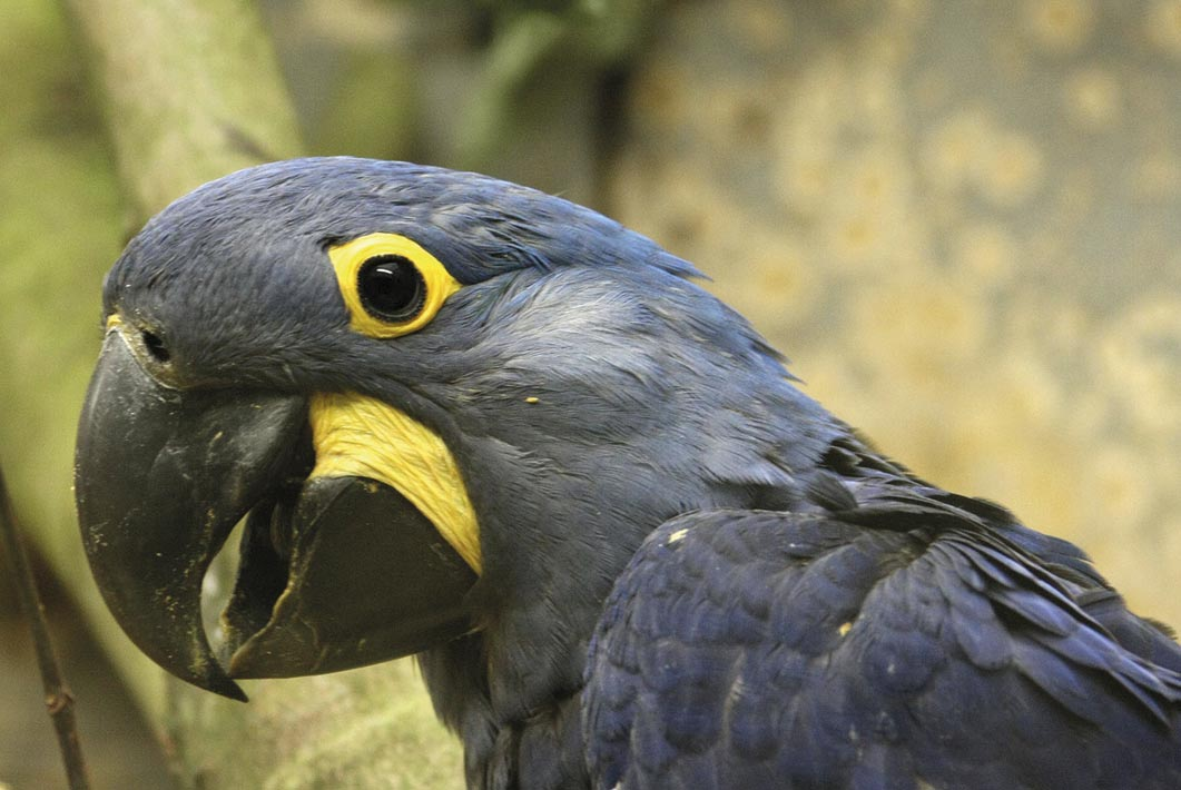 Wuppertal – Grüner Zoo – Eröffnung Aralandia