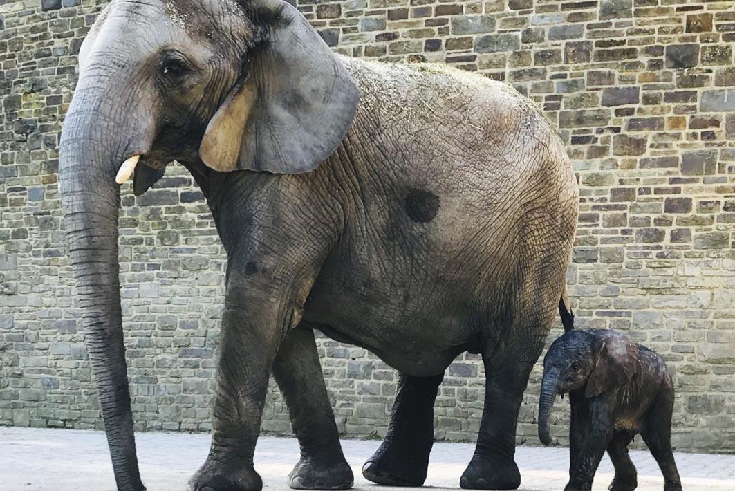 Wuppertal – Grüner Zoo – Kimana