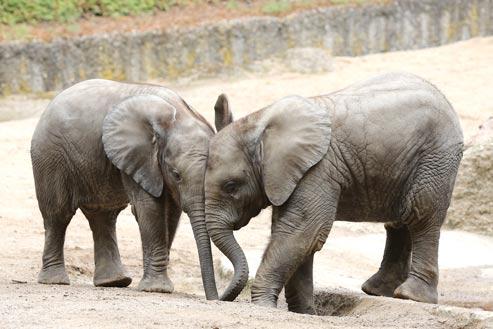 25 Jahre Elefantenzucht